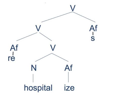 morphology tree diagram 1996 bmw z3 radio wiring part 5