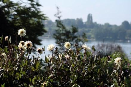 Blütenmeer mit Aussicht: der Ufergarten der Mainau. Foto: Julia Marre