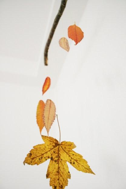 Laub und leise - so schön sieht der Herbst drinnen aus. Foto: Julia Marre