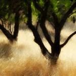 Galería de pinturas hechas en iPad y iPhone - Galeria-pinturas-iPhone-y-iPad-8