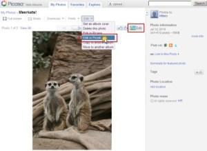 Picnik se integra a Picasa Web Albums