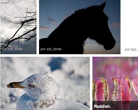 """Flickr presenta oficialmente """"Vista alineada"""" parte de su nueva interfaz - flickr-nueva-interfaz"""