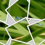 Editar fotos online en iPiccy - collage-fotos-online
