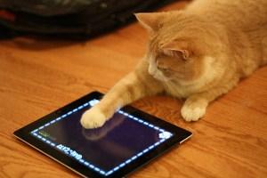 Apps para cuidar y jugar con tu gato