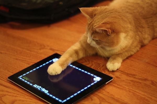Apps para cuidar y jugar con tu gato - Gatos-tabletas