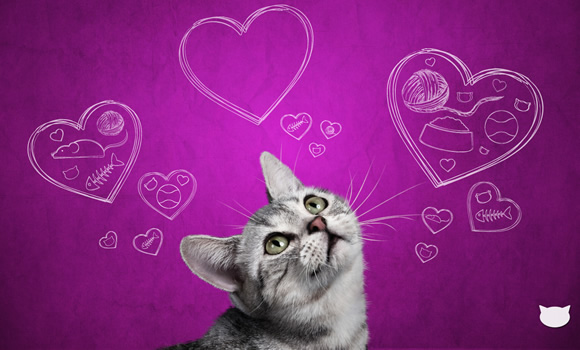 5 gatos famosos en Internet - efecto-whiskas