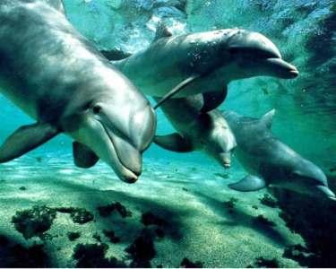 Delfines se comunicarían unos a otros por medio de nombres propios