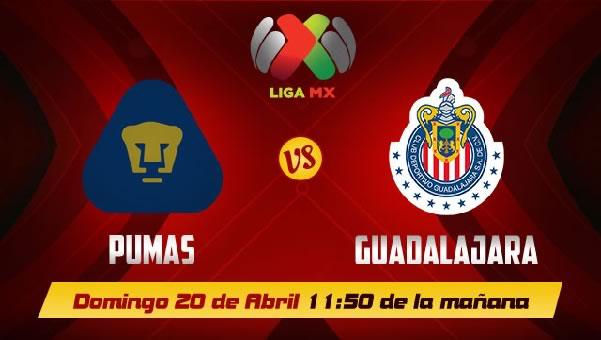 Chivas vs Pumas en vivo, Jornada 16 Clausura 2014 - pumas-vs-chivas-en-vivo-televisa