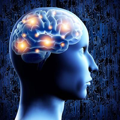 """Diseñan un sistema que """"interroga"""" y muestra cómo reaprende el cerebro - partes-del-cerebro"""