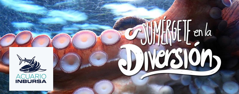 acuario inbursa El Acuario Inbursa abre sus puertas este 11 de Junio
