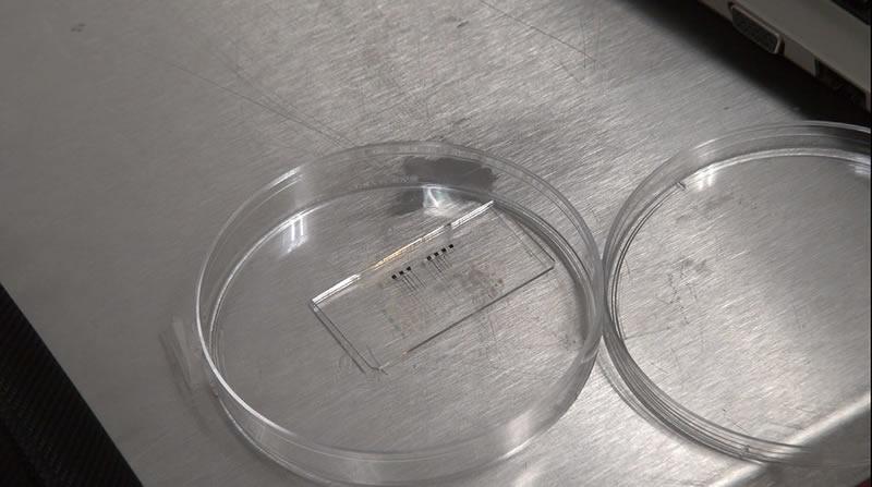 Desarrollan en México tecnología que detecta probióticos en alimentos - microbiosensores-que-detectan-probioticos