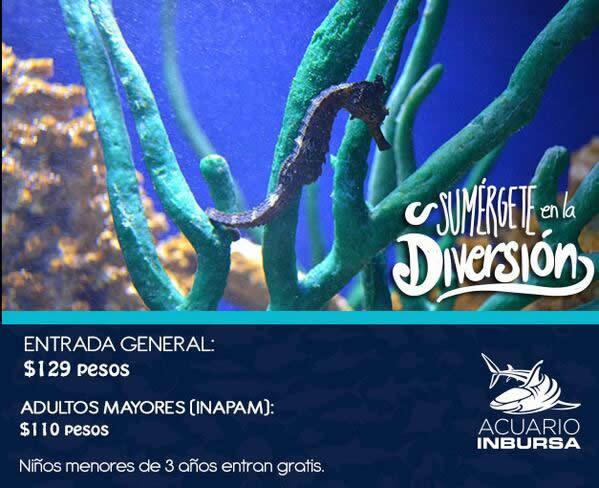 El Acuario Inbursa abre sus puertas este 11 de Junio - precios-acuario-inbursa