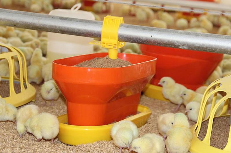 Incrementan productividad en granjas y ganan premio de tecnología - Comedero-Sephnos