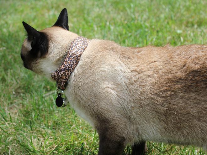 Un hombre utiliza a su gato para hackear el WiFi de sus vecinos - cat-hack-02-660x495