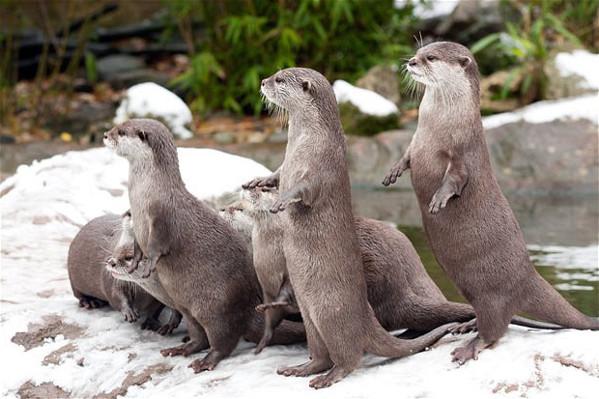 Observa en vivo el Zoológico de Londres desde Youtube - animales-streaming