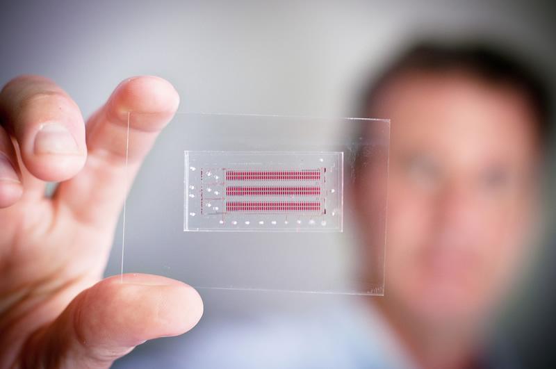 Novedoso chip de Cinvestav para diagnosticar enfermedades en minutos - Chip-Cinvestav-diagnosticar-enfermedades
