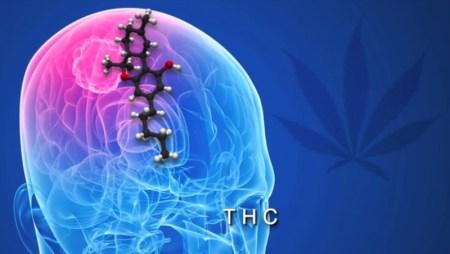 La planta de la marihuana pudiera ser un auxiliar contra el cáncer