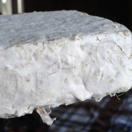 Crean biomaterial resistente a base de hongos para construcción