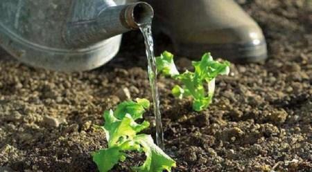 Crean dispositivo que alerta cuando una planta necesita agua
