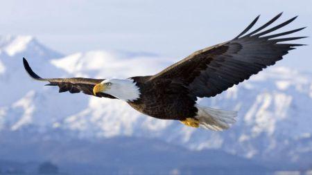 La policía holandesa entrena águilas para atrapar drones