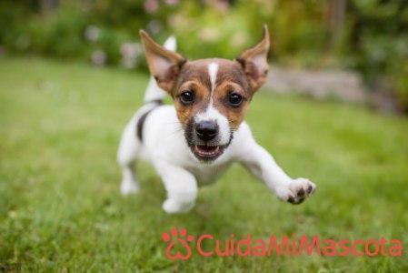 Encuentra al cuidador ideal para tu mascota en CuidaMiMascota