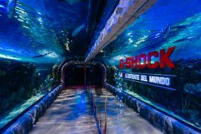 G-Shock presenta relojes con el balance perfecto entre resistencia, tecnología y diseño - g-shock-_1