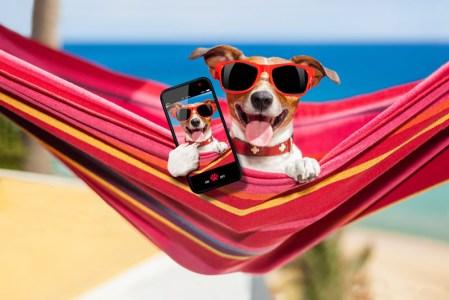 5 Apps para disfrutar el verano