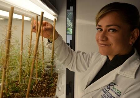 Desarrollan científicos mexicanos fertilizantes a base de nanotecnología