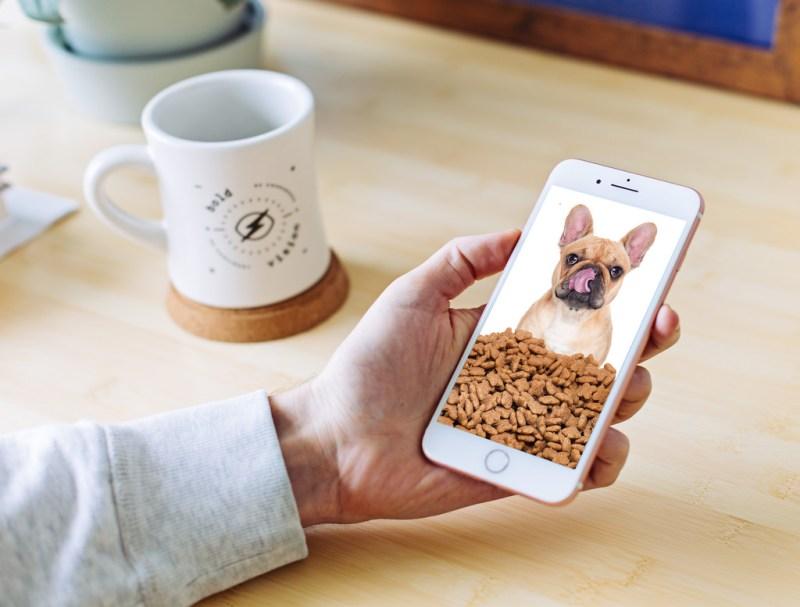 Niñas mexicanas crean app para alimentar perros a distancia - app-para-alimentar-perros-a-distancia-800x607