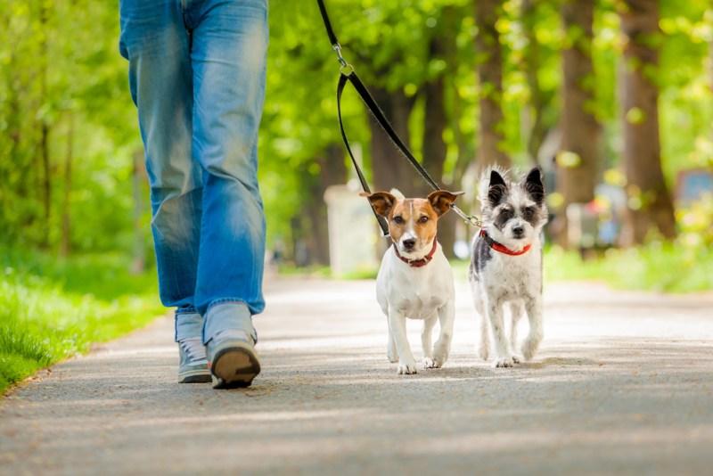 ¡Cuidado! Rastreadores de mascotas podrían 'morder' más de lo pensado - rastreadores-de-mascotas-800x534
