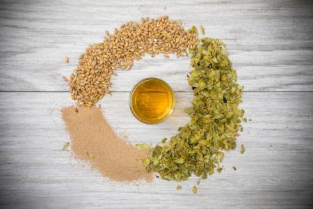 Día de la Cerveza: descubre los 4 ingredientes de la cerveza y los fermentados