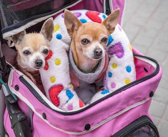 Amor por perrhijos detona el mercado del cuidado animal - perros-a-bordo