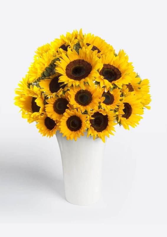 Test para saber qué flor es la perfecta para tu mamá - girasoles