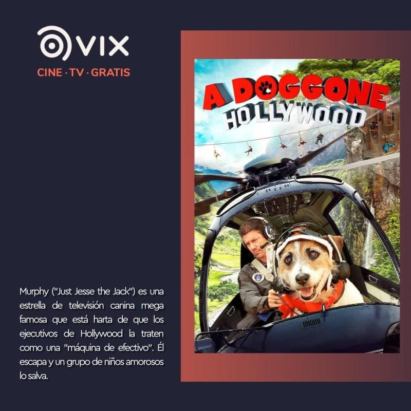 Maratón de lomitos en vix – cine y tv gratis - a-dog-gone-vix-800x800