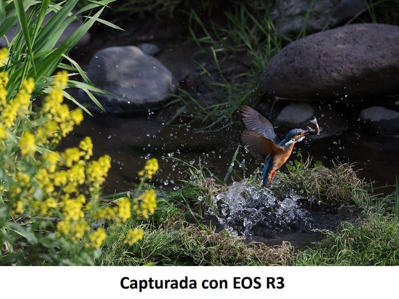 Canon EOS R3, cámara full frame mirrorless de gran velocidad y alto rendimiento - camara-eos-r3-canon-fotografia-movimiento