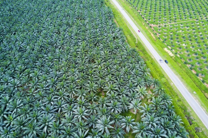 Why We Don't Use Palm Oil