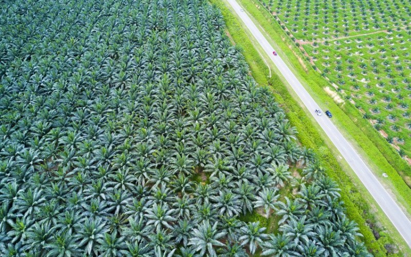 Why We Don't Use Palm Oil Blog Post