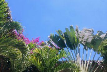 webandsun casa verde paradis piscine palmier