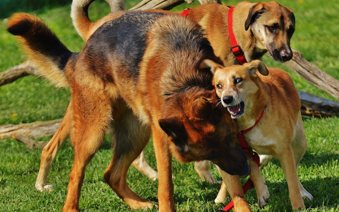The 8 Dog Breeds that Raise Your Homeowners' Insurance Rates the Most