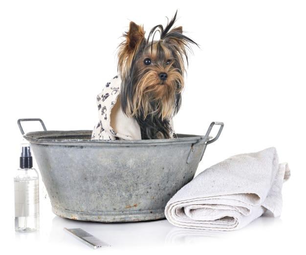 Cachorro depois do banho