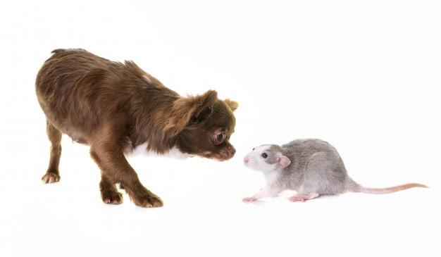 Adaptando o cão a animais de outras espécies
