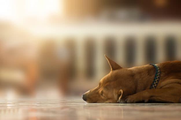 Saiba como ajudar o cão a dormir melhor