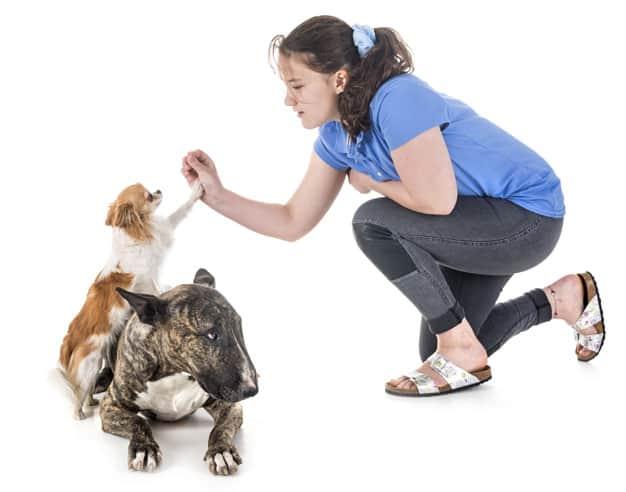 líder do seu cão