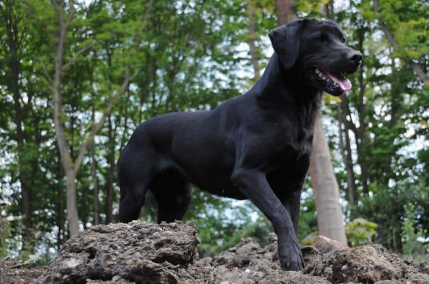 Saiba porque os cães enterram coisas