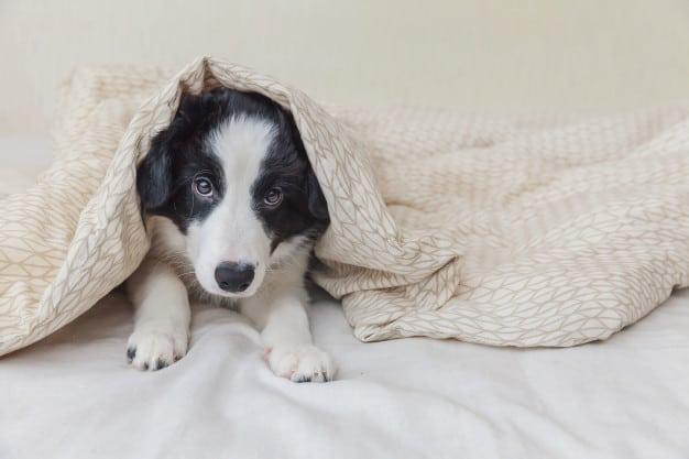 Aprenda a ensinar os comandos básicos ao seu cão filhote
