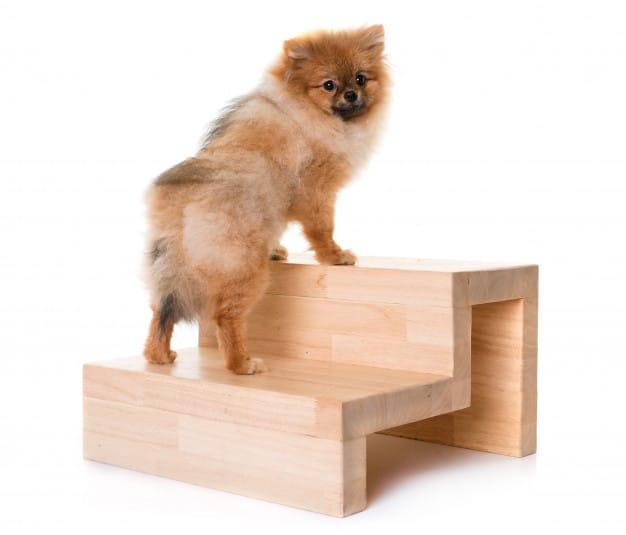 Exercite seu cão dentro de casa com essas dicas fáceis