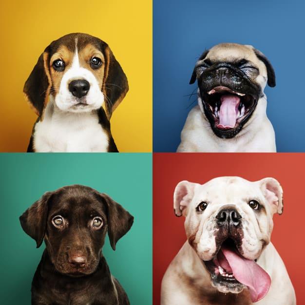 Como fazer boas fotos do seu cachorro