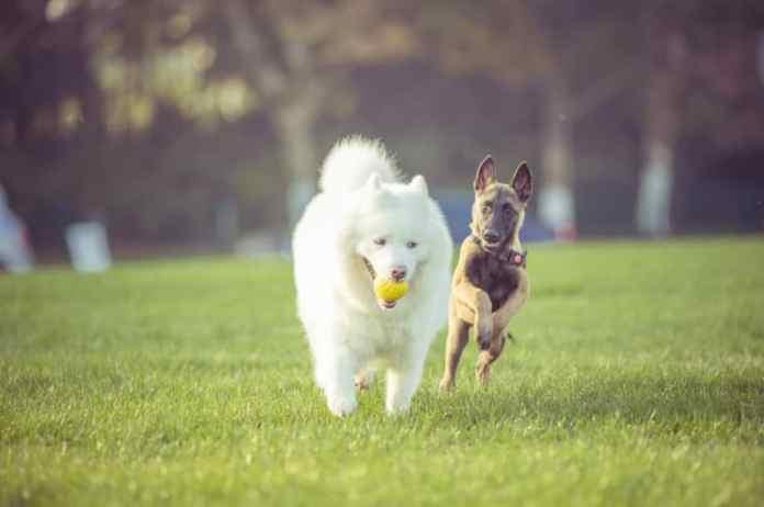 Brincar com o cão é mais importante do que você imagina