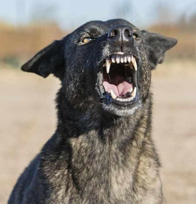 Agressividade em cães: Entenda o que é