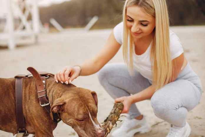 Guia de Adestramento de Cães - Passo a Passo